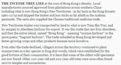 Incense Tree SCMP article 9th March 2014