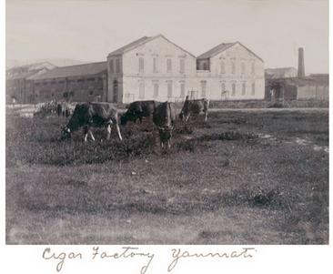 Orient Tobacco 1910 Manufactury photo Yaumatei