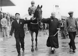 Li Lan Sang image 2 horseracing