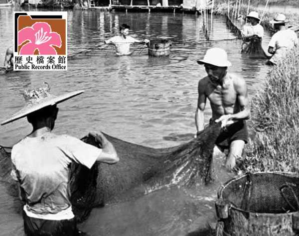 Fish Ponds 2 HK 1961 image