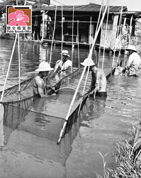 Fish Ponds 3 HK 1961 image