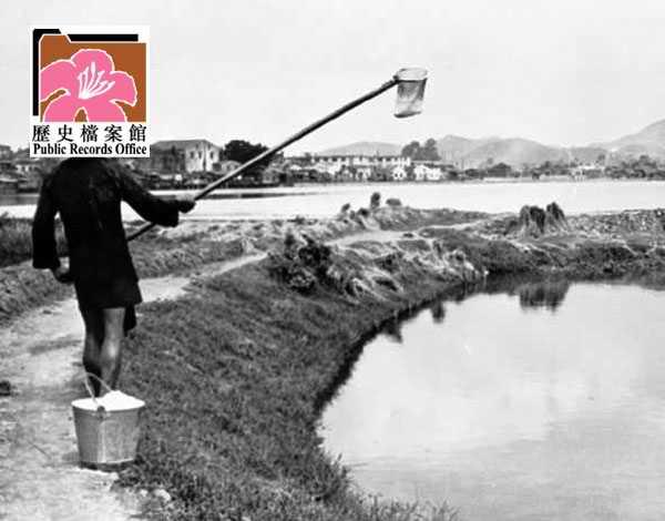 Fish Ponds 6 HK 1961 image