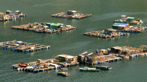 Lamma Island Fish Farms