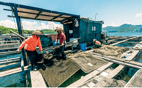 Fish Farming Lamma Island snipped Time Out HK 19.7.2015 photo Calvin Sit