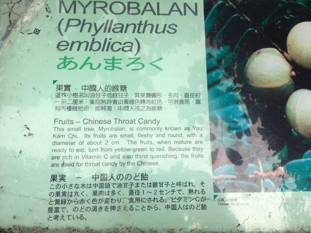 Myrobalan Notice A